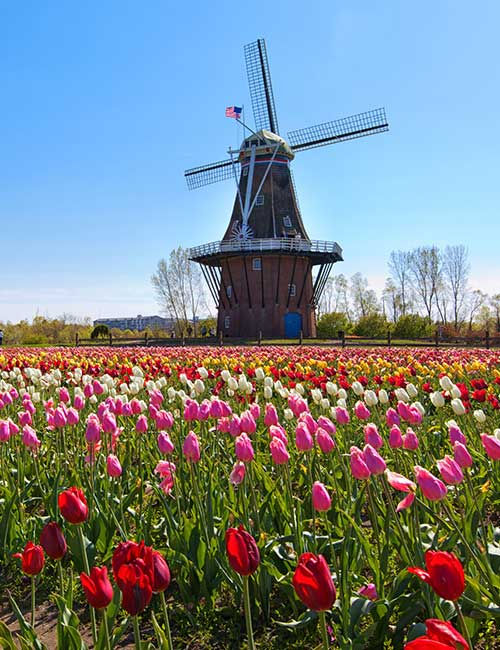 Holland Tulip Bus Tour